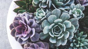 repot succulent featured image