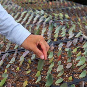 Succulent Prop Featured Image